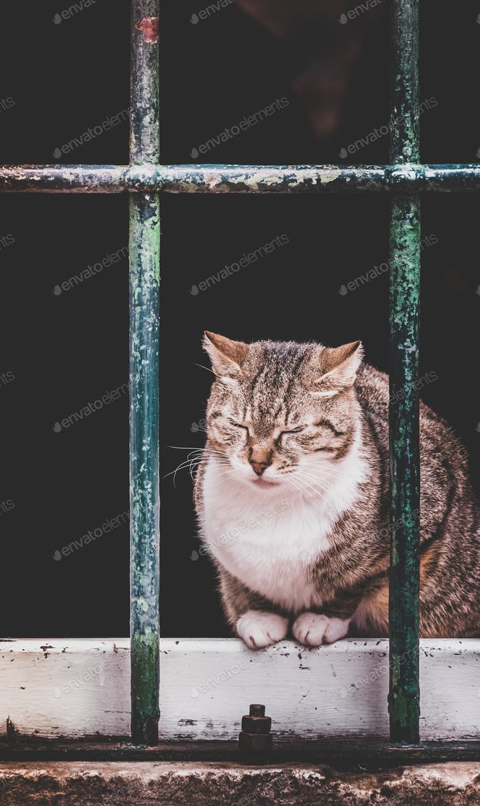 Cute cat sitting on window pane