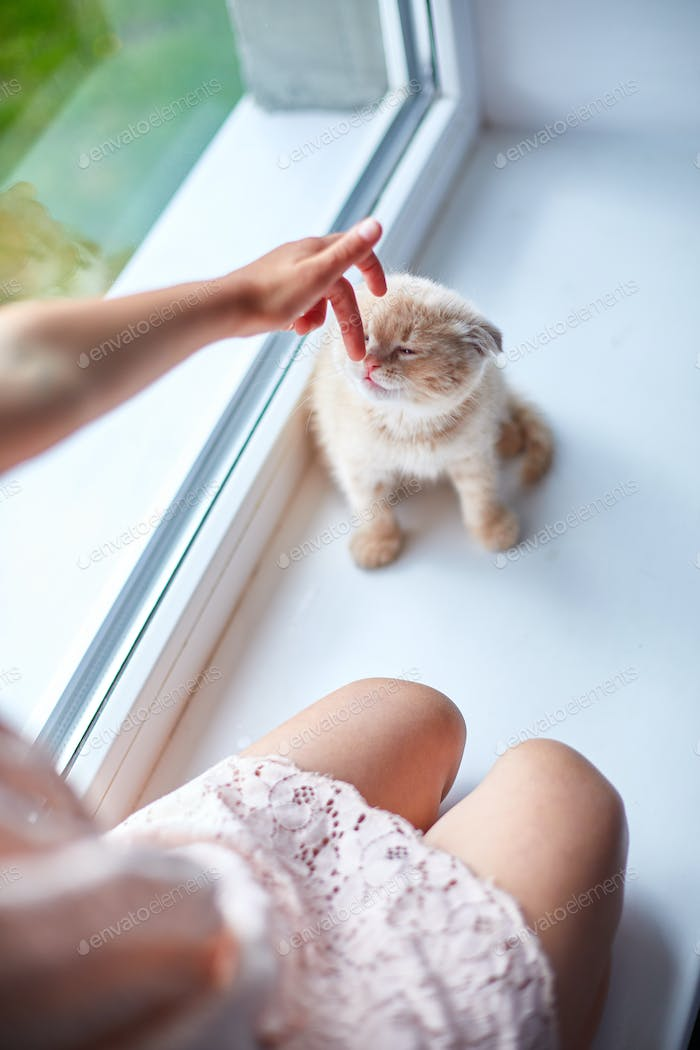 Child girl plays with a British little playful kitten at home windowsil