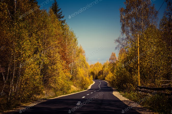 Descending empty road in the autumn forest. Colorful filtered image