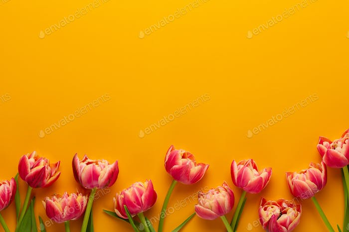 Spring tulips on yellow colors background. Retro vintage style.