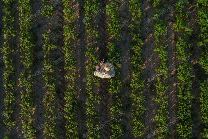 Soybean farmer with drone remote controller in field