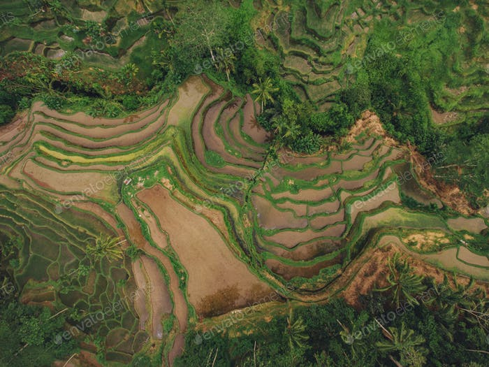 Rice paddy terraced fields