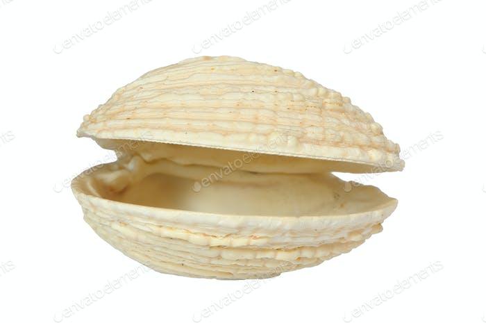 Bi-valve seashell