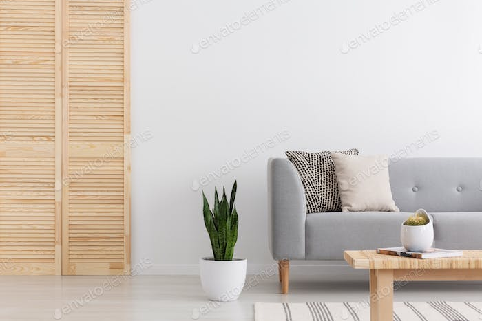 Green plant in white pot between wooden screen and simple grey s
