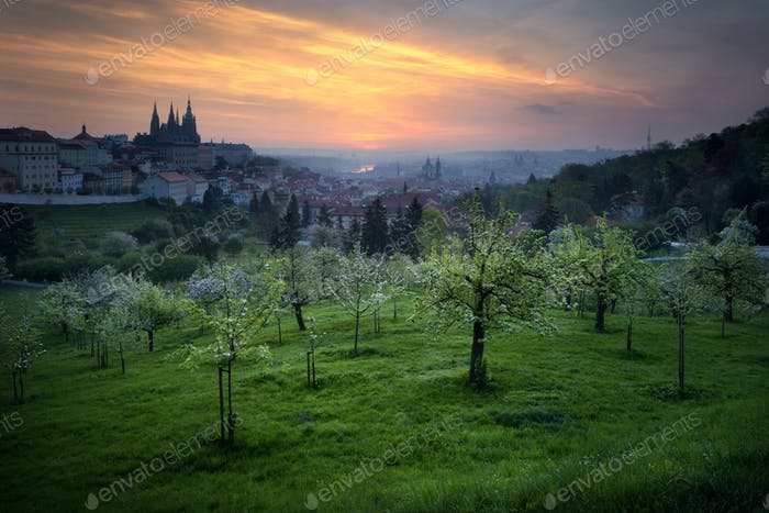Historic St. Vitus cathedral during spring morning, Prague, Czec