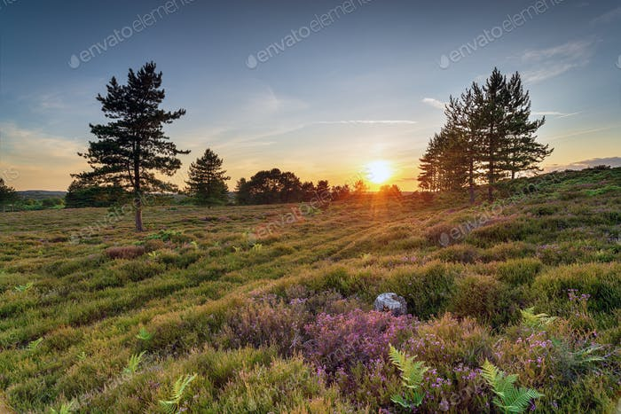 Sunset on Slepe Heath
