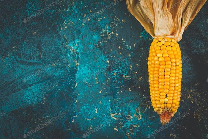 Ripe dried corn cobs