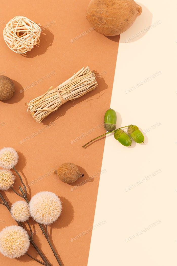 Fall minimal background. Herbarium Flat lay with shadows. Autumn Beige fashion colours concept