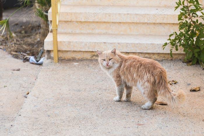 Konzept der obdachlosen Tiere - Streunende schmutzige Traurigkeit Katze auf der Straße