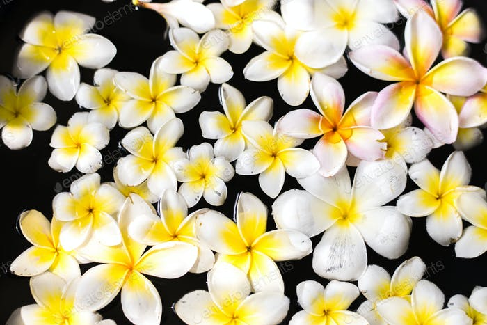 Plumeria floating on water at spa salon