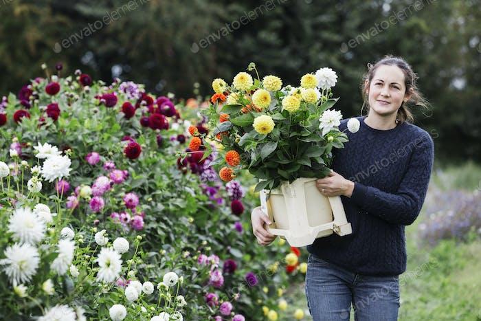 Eine Frau, die in einem Bio-Blumen-Kinderzimmer arbeitet, Blumen für Blumenarrangements und kommerziell