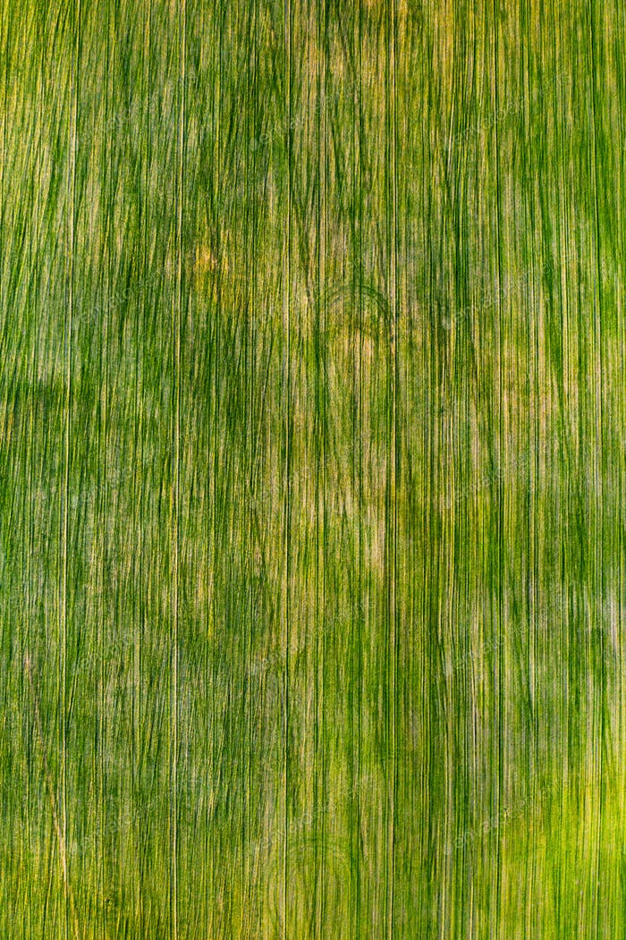 Bird's-eye view of a green field .Sowing campaign in Belarus.Nature Of Belarus.Own green field