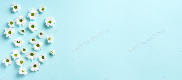 Daisy pattern. Top view. Flat lay. Floral pattern of white chamomile flowers on blue background