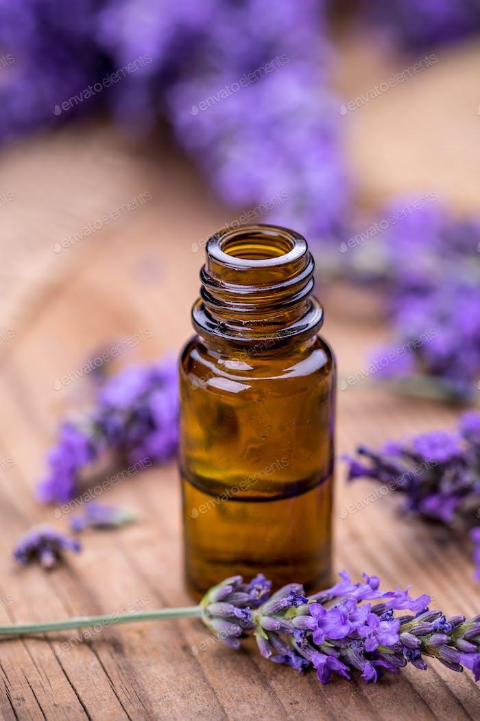 Fresh lavender flower