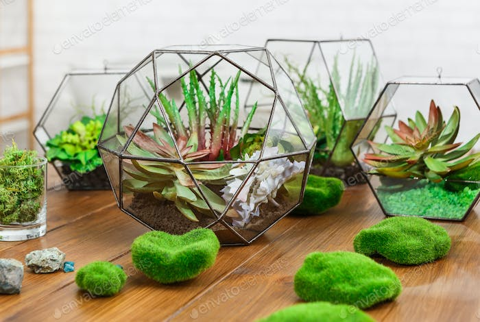 Florarium vases with plants and moss stones on table