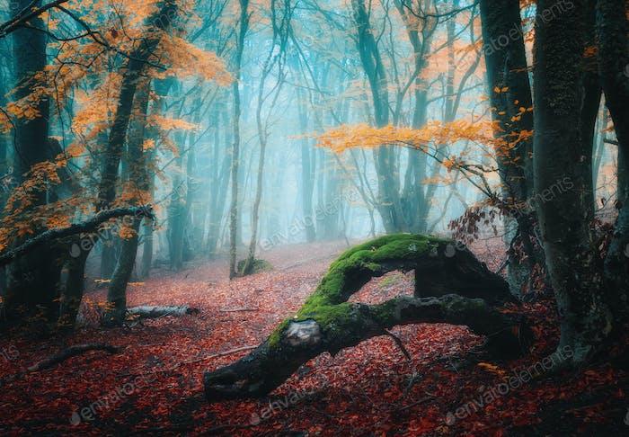 Dreamy autumn forest in fog. Mystical foggy trees in fall