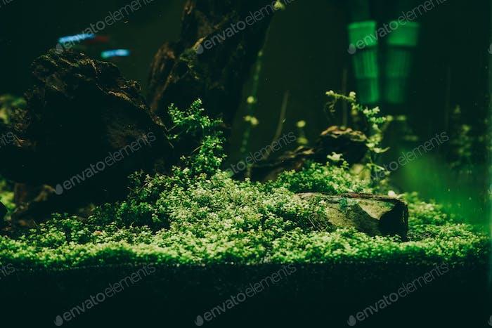 Exotische Fische im Sammleraquarium