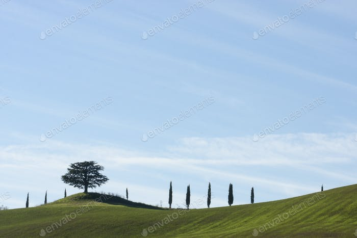 Rolling hills and cypress trees silhouetted on the horizon under a blue sky.