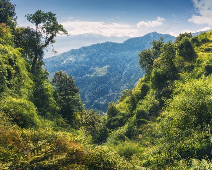 Tropical forest with green tress on the mountain