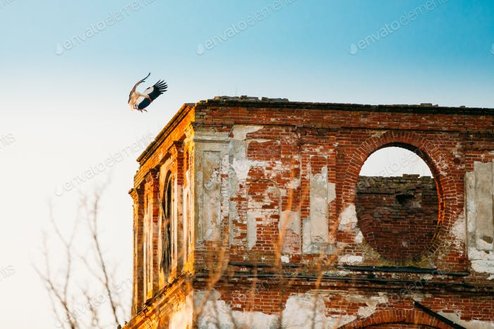 Europäischer Weißstorch Länder an der Wand der alten ruinierten orthodoxen Kirche