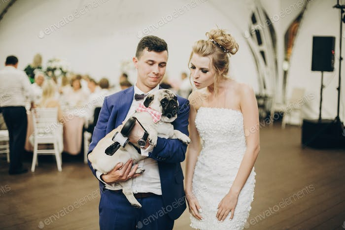Stylish bride and groom hugging and having fun with pug dog in bow tie