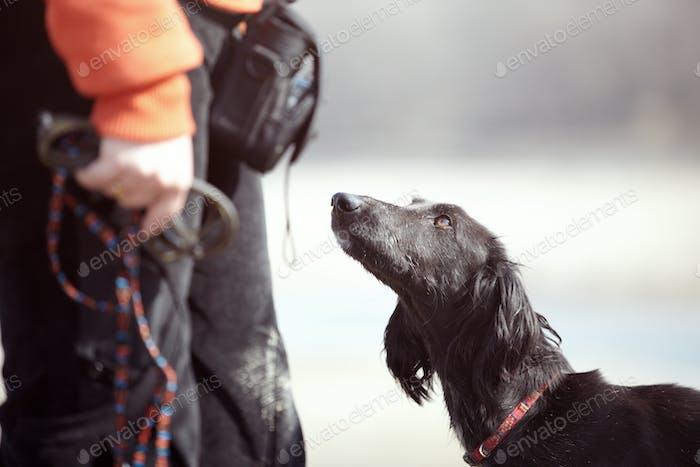 Tazy - Turkmenischer Windhund und Trainer im Freien