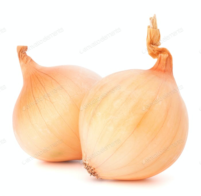Onion vegetable bulbs