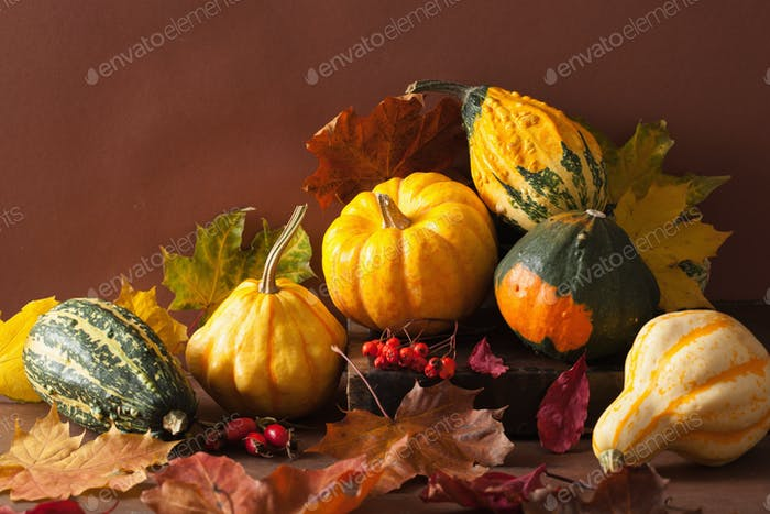 decorative mini pumpkins autumn leaves for halloween thanksgivin