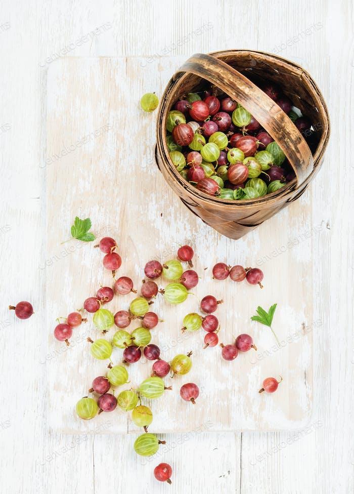 Разнообразие спелых садовых крыжовников в березовой корзине