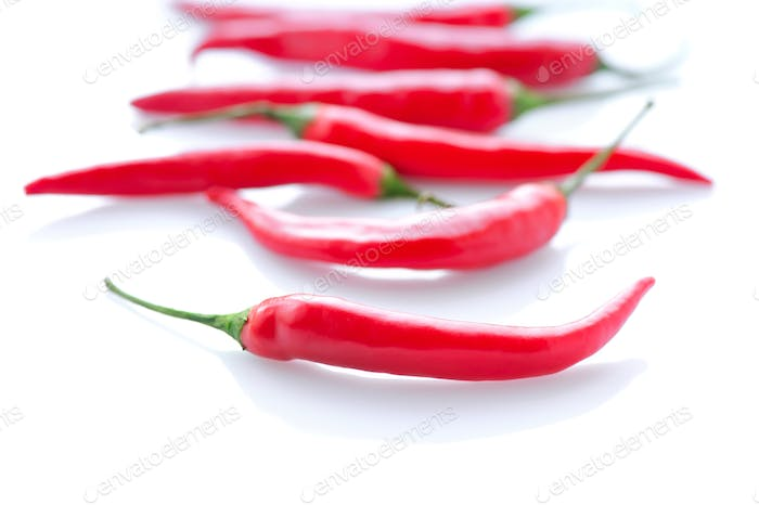 Hot red chili or chilli pepper on white background