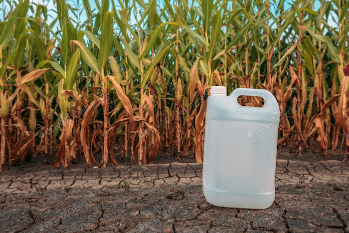 White plastic pesticide chemical jug in cornfield