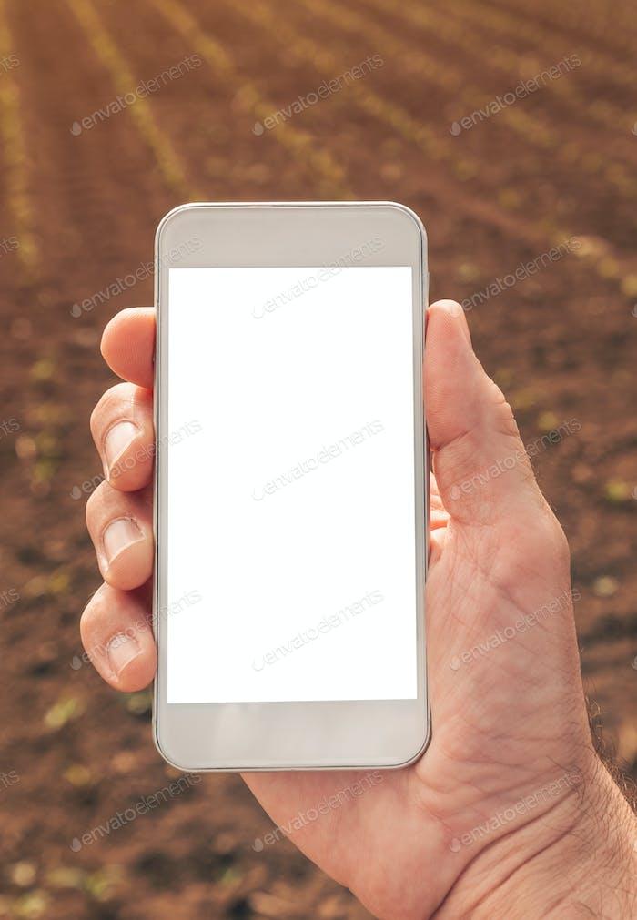 Agronomist mit Smartphone Mock up Bildschirm im Maisfeld
