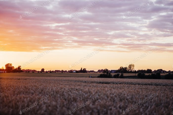 Agricultural field during sunset