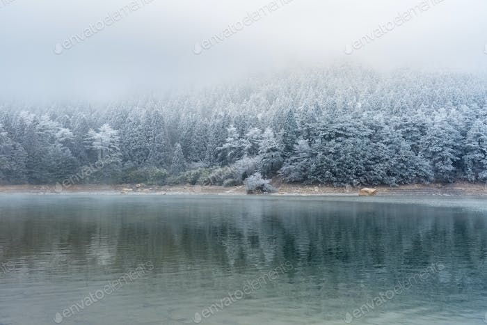 lake and forest in winter