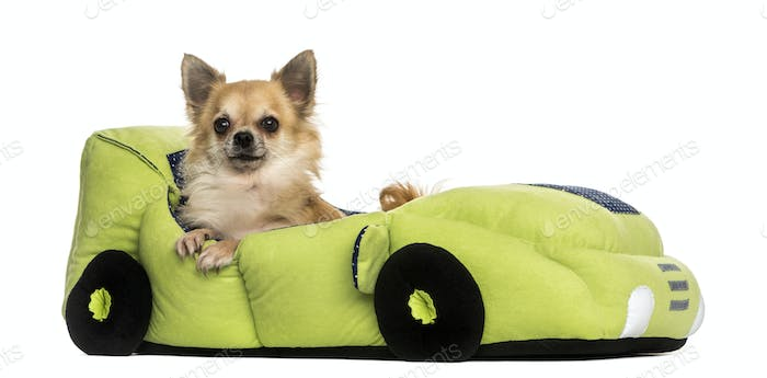 Chihuahua in a car shaped bed, isolated on white