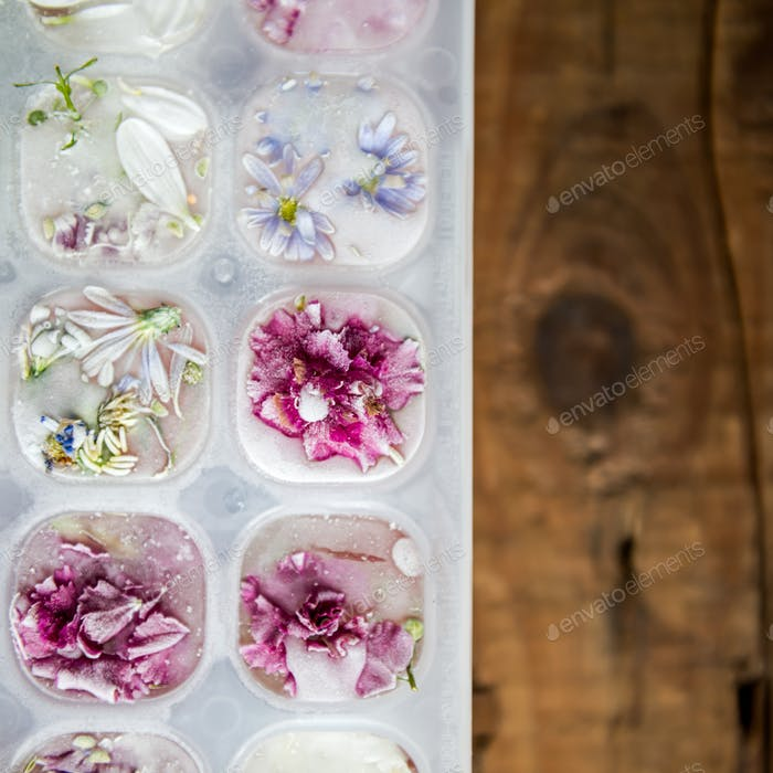 Tablett mit gefrorenen Blumen in Eiswürfeln