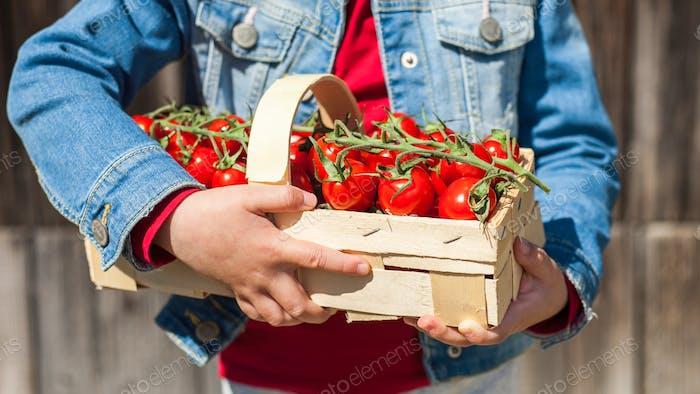 Reife saftige Tomaten im Weidenkorb