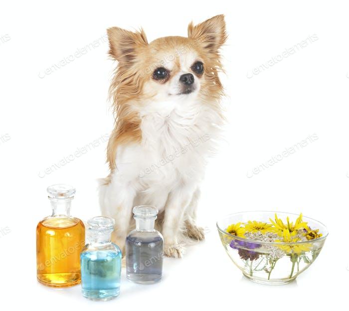 dog and essential oils