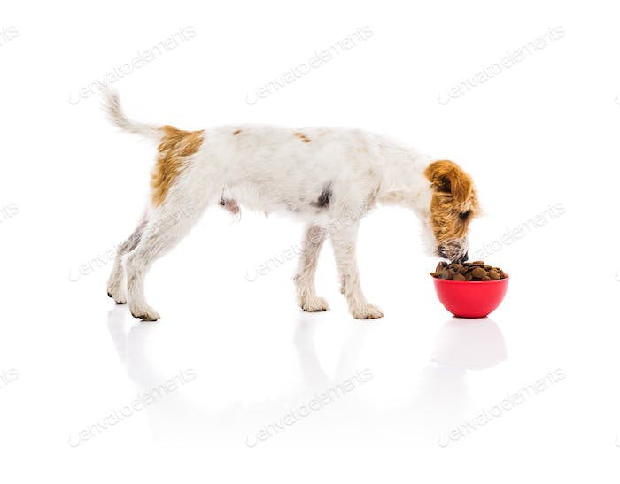 Young dog with bowl full of dog food isolated