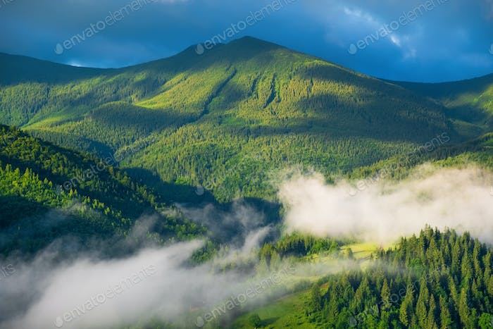 Foggy mountains at dawn. Forest and fog. Landscape in summertime