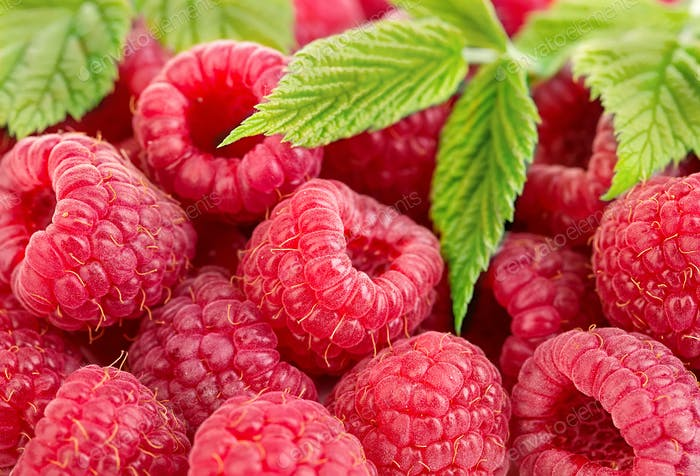 Ripe raspberries with leaves close-up as a background.
