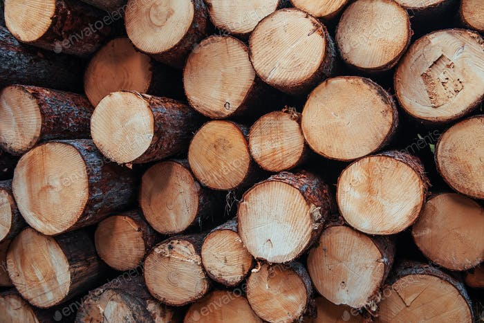 Close up view of the front of many logs prepared for the winter. Nature background