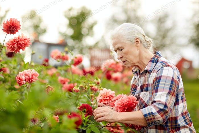 Senior Frau mit Blumen im Sommergarten