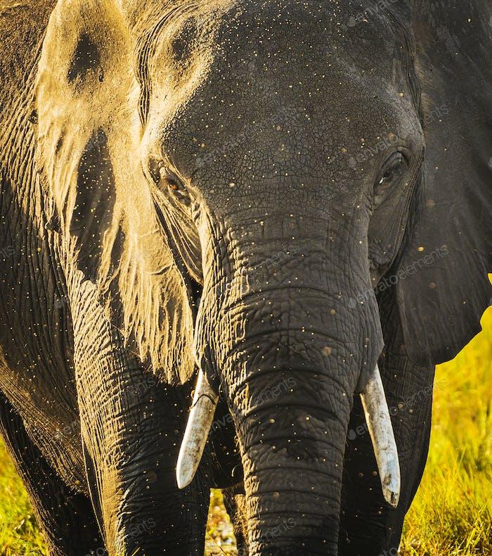 Elephant With Water Spray
