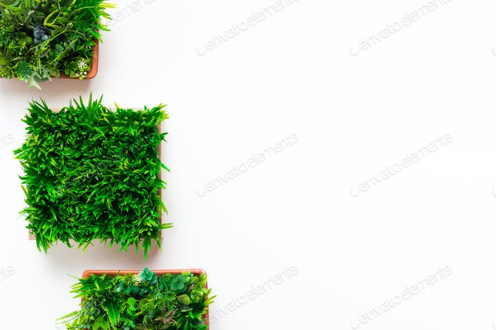 Grass plant in square pots on white background