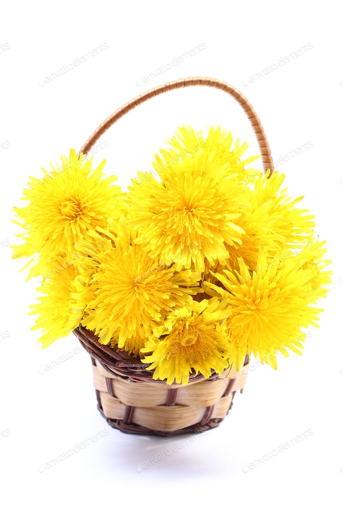 Yellow flowers of dandelion in wicker basket