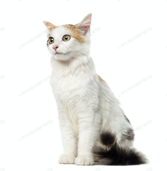 Kitten European Shorthair sitting, 4 months old, isolated on white