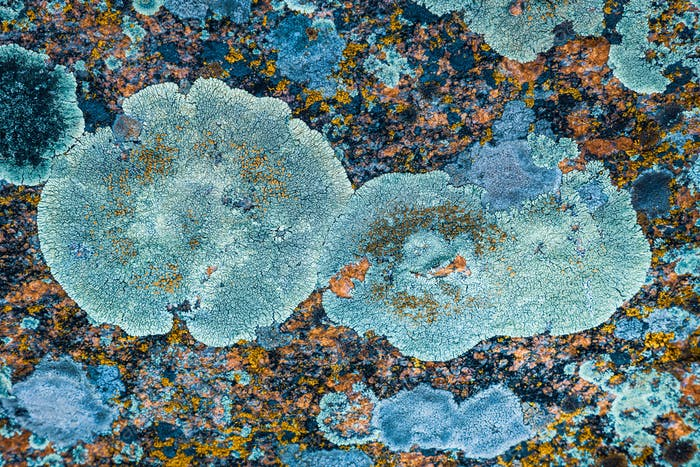 Multi-colored fungus texture on the stones