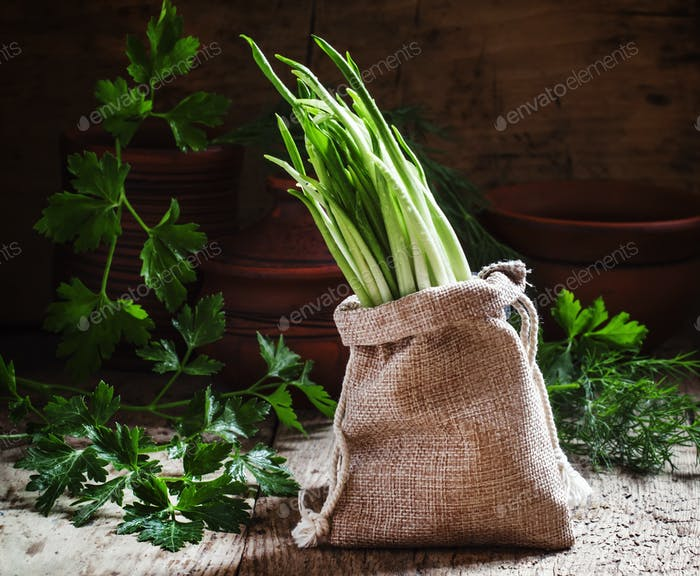Fresh wild garlic, green sprouts in a bag of burlap