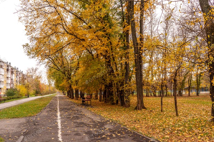 Beautiful Colorful Autumn park and alley